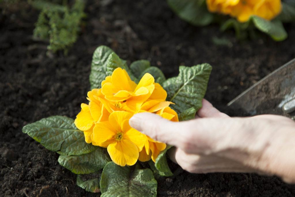 Resident touching flower in the garden