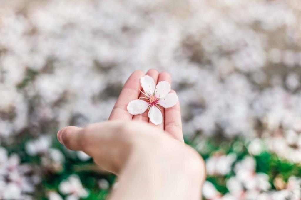Cherry blossom on hand