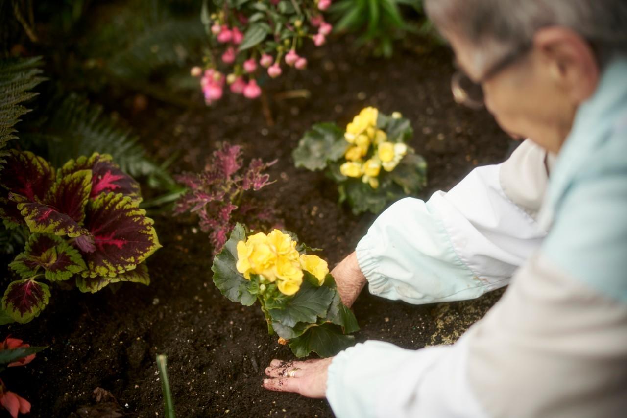 Mulberry PARC resident Virginia gardening