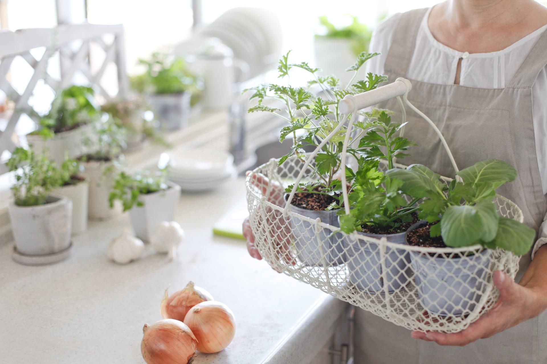 Gardener holding planters